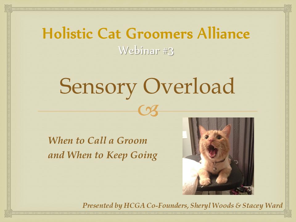 HCGA Webinar 3: Semsory Overload